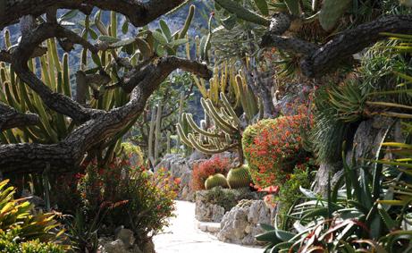 Il Giardino esotico di Monaco