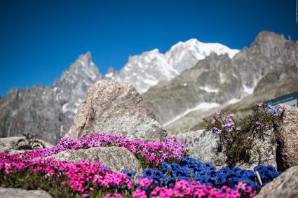 Skyway Monte Bianco, il Saussurea, il giardino botanico alpino piu? alto d'Europa