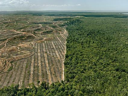 Clearcut #1 Palm Oil Plantation, Borneo (Malaysia), 2016