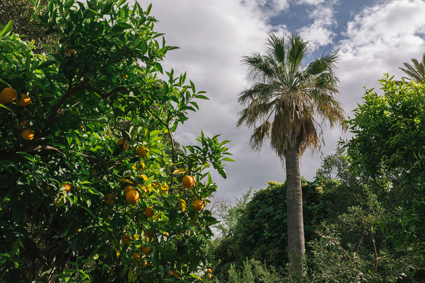 L'agrumeto di Villa Tasca, Palermo
