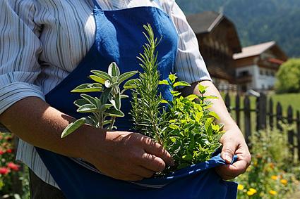 Le erbe aromatiche coltivate nei masi Gallo Rosso