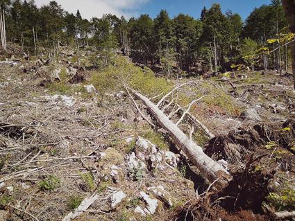 Albero nella valle di raccolta