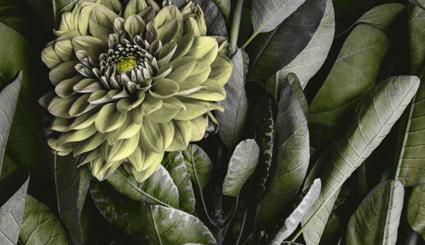 L'immagine emblema del Giardino Marling