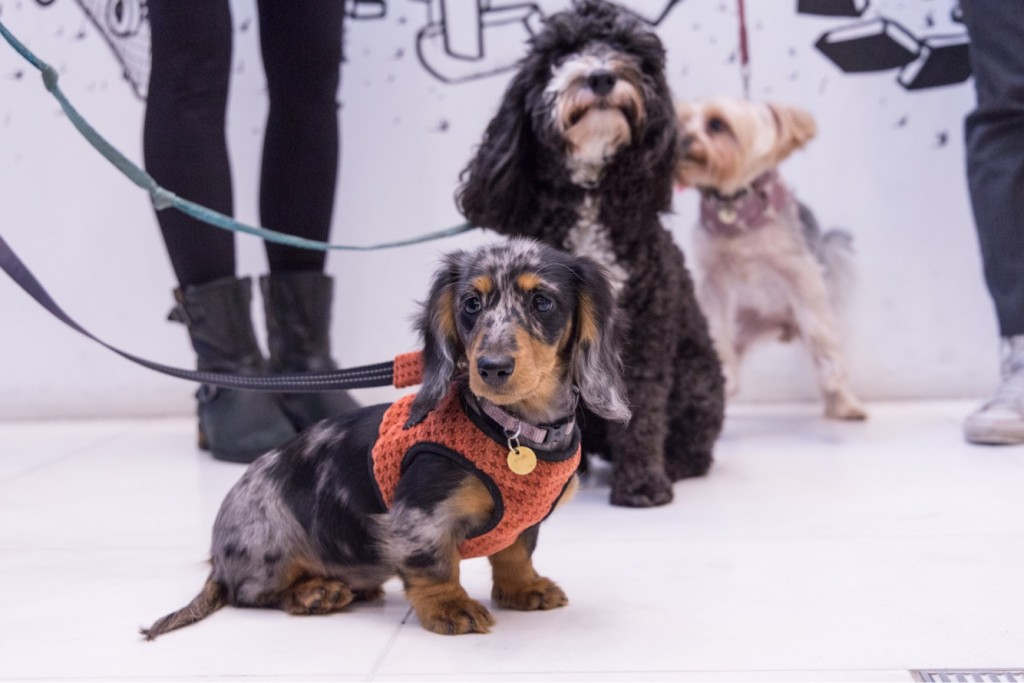 cani davanti all'ufficio yoiutube
