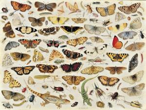 von Kessel Jan il Vecchio -Studio di farfalle e altri insetti