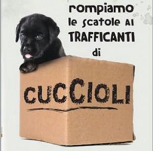 lav-traffico-cuccioli
