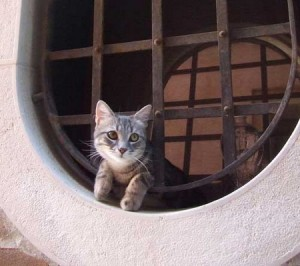 giudecca-cat1