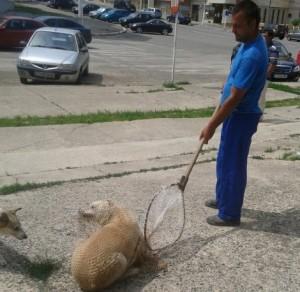 Mangalia, Romania: l'ennesimo massacro di randagi