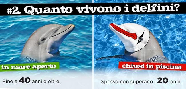 Liberta_per_i_delfini