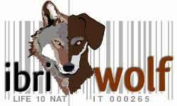 ibriwolf