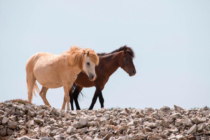 I cavallini di Skyros