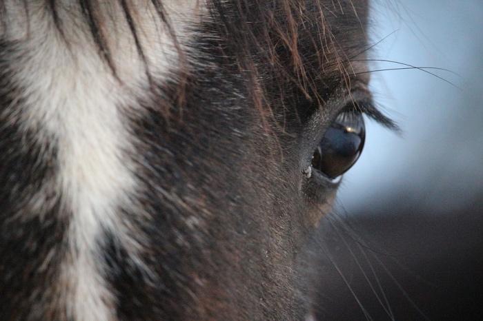 occhio cavallo