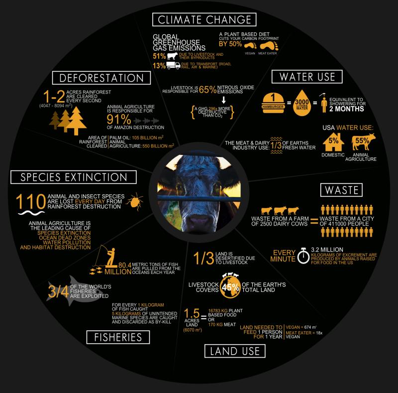 Cowspiracy-Infographic-Metric_Fotor