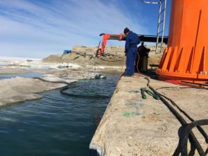 Giorno 58 - immersioni sul molo