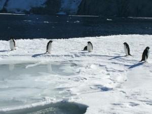 Giorno 88 - pinguini sul pack