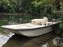 Un'attenta ispezione rivela che l'imbarcazione è perfettamente vuota.