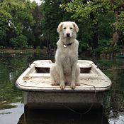 Forse, a giudicare dalla riva che inizia ad allontanarsi, la barca potrebbe essere priva di ormeggio?