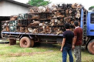 Il mercato alimentare dei cani in Asia