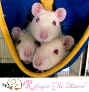 Gli ultimi è il nuovo rifugio per salvare e riabilitare roditori sopravvissuti alla vivisezione. www.ultimi.com