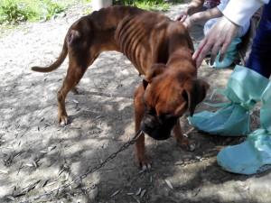 Uno dei cani rinvenuti all'interno della proprietà privata nel reatino