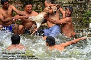 La gioventù nepalese compiace gli dei affogando una capra