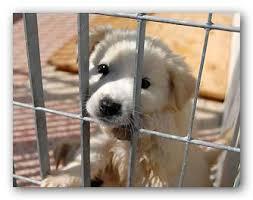 Secondo la 281/91 i canili dovrebbero essere solo luoghi di breve transizione per gli animali e non alimentare affari divenuti ormai incontrollabili (foto di tipresentoilcane.com)