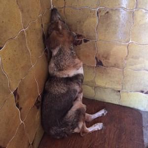Drammatiche le condizioni dei cani nella struttura municipale di Galatina, curati dalla locale Enpa per un decennio