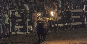 Santa fiesta è un documentario di Miguel Angel Rolland sui massacri di animali in Spagna motiati da feste tradizionali e religiose. Foto di Kike Carbajal