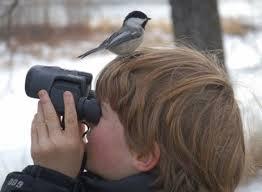 Il birdwatching cattura gli uccelli solo con lo sguardo