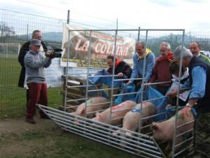 Una gara di corsa per giovanissimi maiali in mezzo al frastuono di un evento che magnifica la loro trasformazione in pietanza