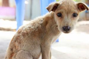 Lanciato da un balcone per un gesto di stizza: così è morto a Alba Adriatica un cucciolo di tre mesi.