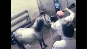 Secondo una nuova delibera della Fise si possono iscrivere nel registro sportivo anche i cavalli DPA, destinati alla produzione alimenntare, ovvero il macello.