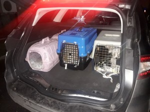 16 cuccioli importati illegalmente in Italia viaggiavano stipati nei trasportini fino al sequestro, effettuato da Fare Ambiente e Carabinieri, in prossimità di Valmontone (Rm)