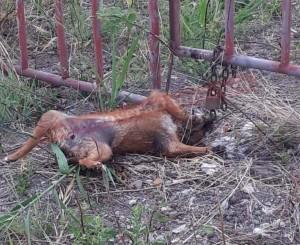 Uccisa brutalmente e poi agganciata al cancello di un cantiere edile: è l'ennesima barbarie contro un cane in Calabria.