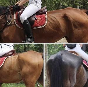 Titolare della struttura, ma anche proprietari, veterinari, frequentatori, fornitori, maniscalchi: tutti finora sarebbero rimasti indifferenti di fronte alle terribili condizioni dei cavalli e di alcuni asini.