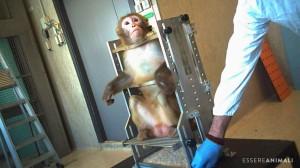 Un'investigazione di Essere Animali mostra per la prima volta le condizioni di vita di macachi nel laboratoro di ricerca di un'università italiana.