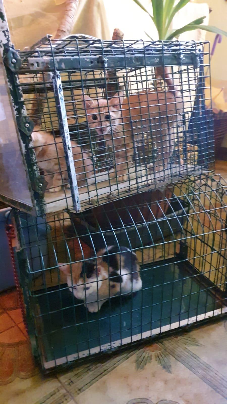 Rete Per Gatti Condominio via lavinio: l'inferno dei gatti continua - il richiamo
