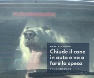 Abbandoni di cani, gatti, cavalli, e picco di cani dimenticati dentro l'auto: l'estate 2019 è stata davvero incivile.