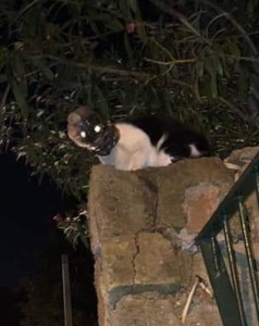 Libero per fortuna in extremis il gatto con la testa intrappolata a forza in una bottiglia per più di otto giorni: ora si cercano i responsabili di questo gesto gravissimo.