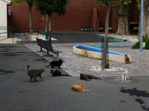 Con un bando di gara al ribasso la Giunta Raggi vuole affidare lo storico gattile di Porta Portese per una somma che consentirà al massimo di sfamare i gatti con 30 centesimi giornalieri a testa. Gli animalisti ne chiedono l'immediato ritiro.