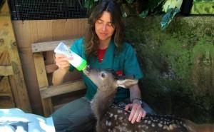 Francesca Manzia, direttore del Centro di recupero fauna selvatica della Lipu a Roma con un ospite