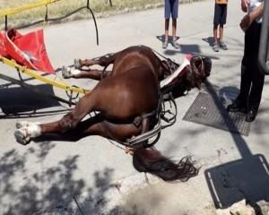 Morto di caldo e fatica il 12 agosto, il cavallo sfruttato dall'impresa che gestiva le carrozze turistiche presso la Reggia di Caserta non corrispondeva ai documenti ufficialmente registrati.