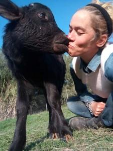 Francesca Cosentino, fondatrice e presidente dell'associazione Ariel la speranza di chi non ha voce, con il bufalino Sheva riscattato dal macello