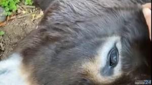 Zaira è stata uccisa a Nepi all'inizio di novembre dalla fucilata di un caccioatore di 77 anni, ma è una delle centinaia di animali d'affezione che ogni anno cadono sotto i colpi dei fanatici della pratica venatoria.