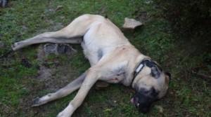 cane ucciso cacciatori