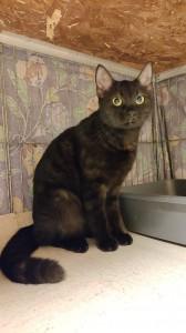 Finalmente in salvo grazie all'intervento dei volontari la gattina riceverà cure e assistenza, quindi si cercherà per lei una famiglia.