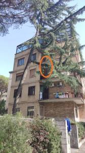 La gattina per cui è stato inutilmente richiesto per due giorni  l'intervento dei vigili del fuoco nel quartiere Eur, a Roma, non riusciva a scendere dal ramo di un albero a più di quattro metri da terra, corrispondente al terzo piano di un palazzo.