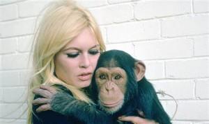 BB scimmia