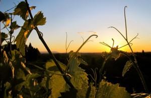 Tramonto nelle vigne a Jerusalem, Slovenia