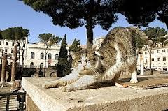 gatto di roma 3